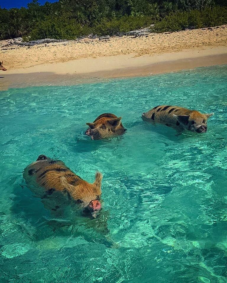 Bahamas & Keys, Snorkel, Fish, Fun | Rent a Boat with a Captain