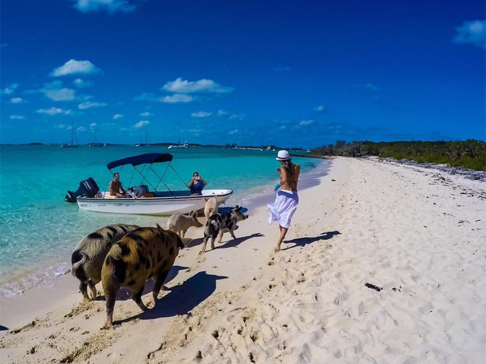 Charter a boat miami to bahamas pig on the beach