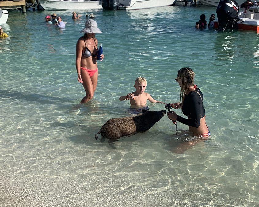 Bahamas wild pigs IMG 6626 web 2