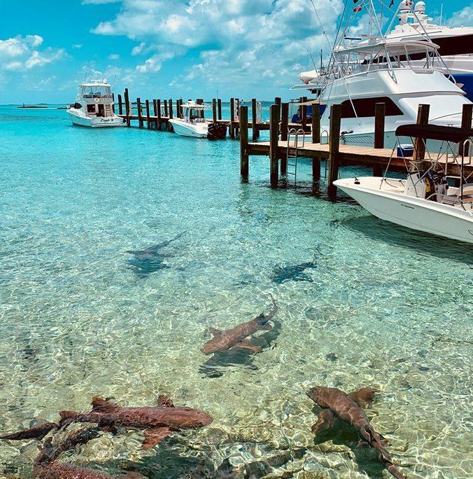 bahamas sharks clear water IMG 3005web 2